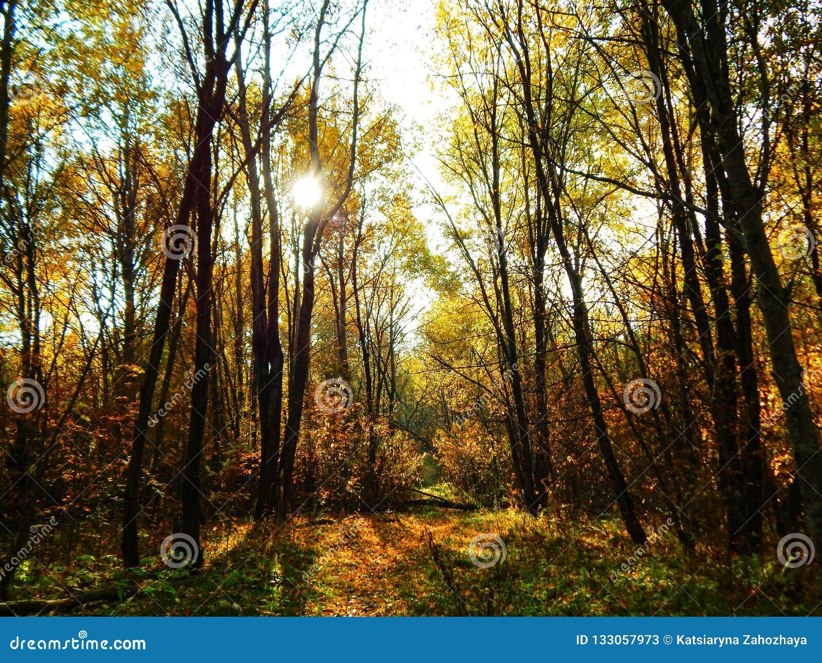 Herbstansicht in den Wald