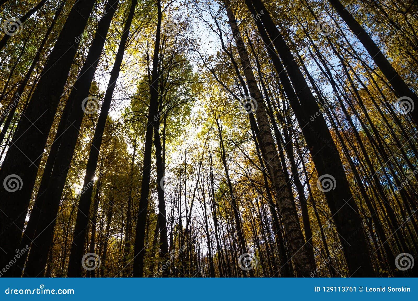 Herbstbäume im Wald am sonnigen Tag