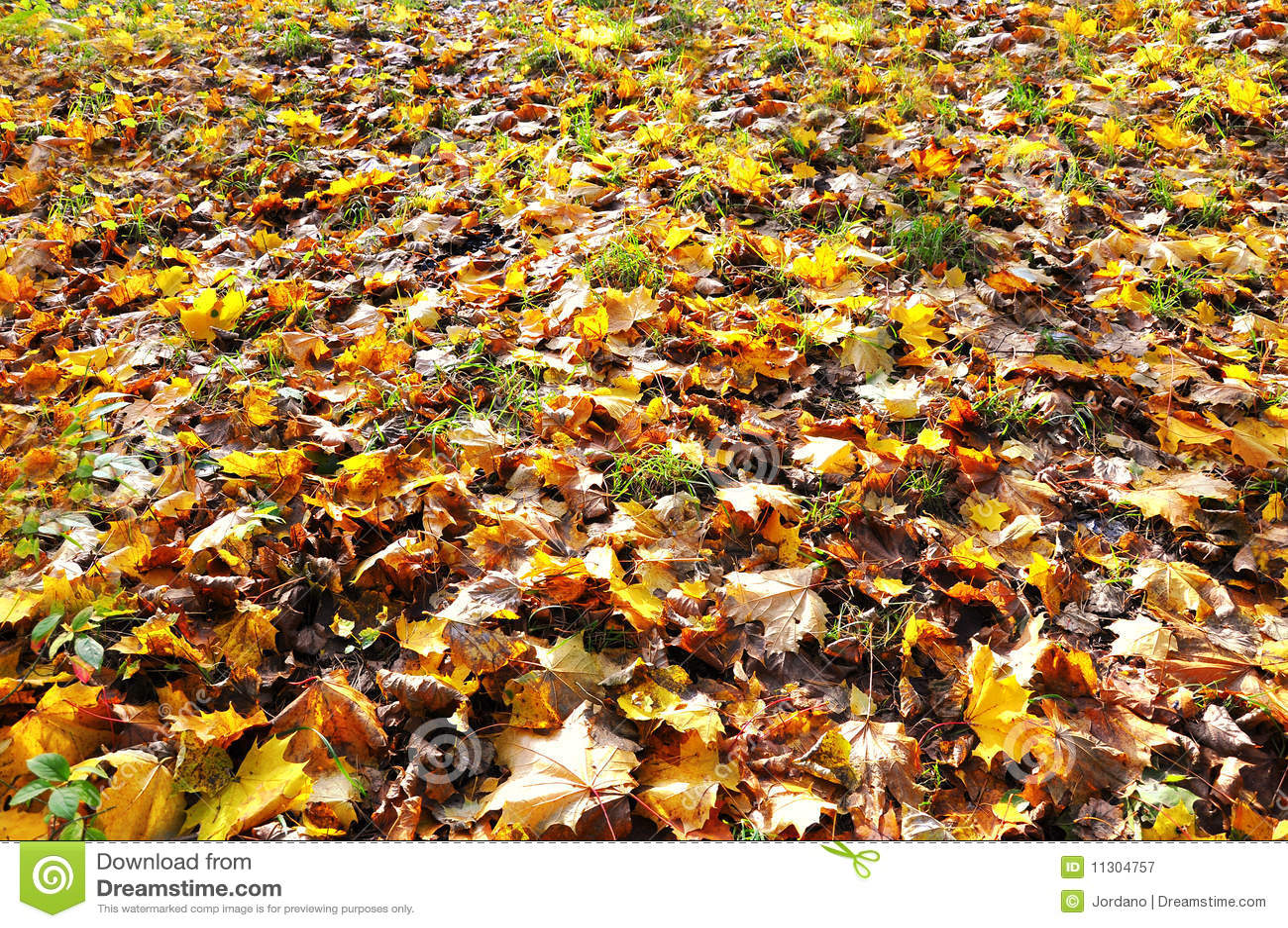 Herbstblätter, die den Boden umfassen