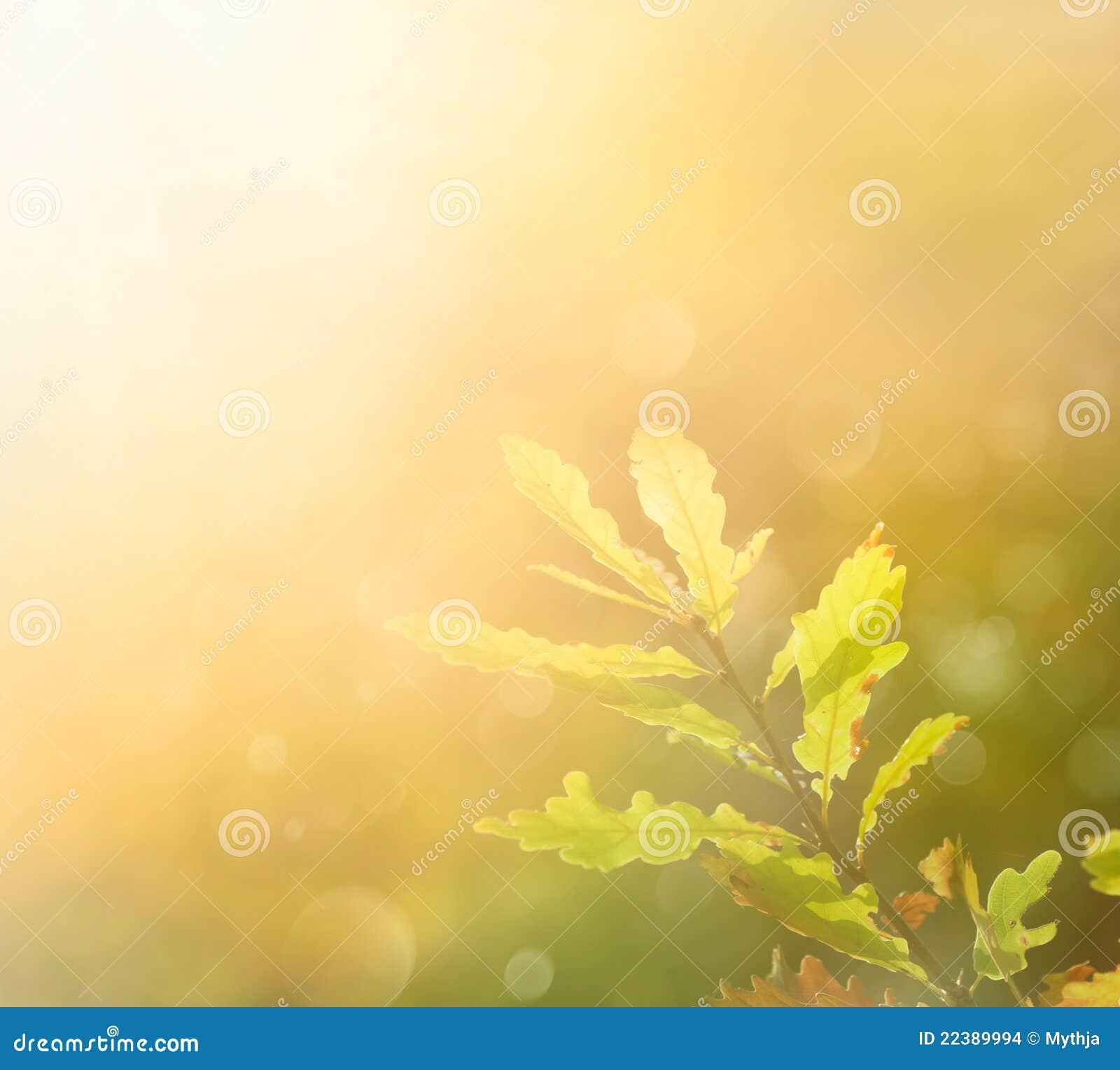 Herbstblatt morgens