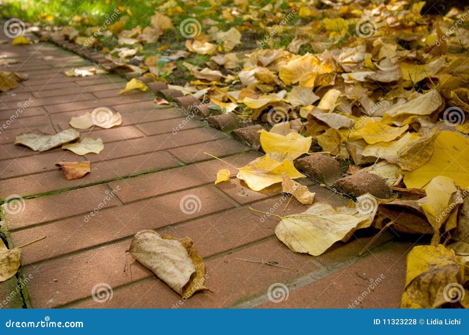Herbstblattallee