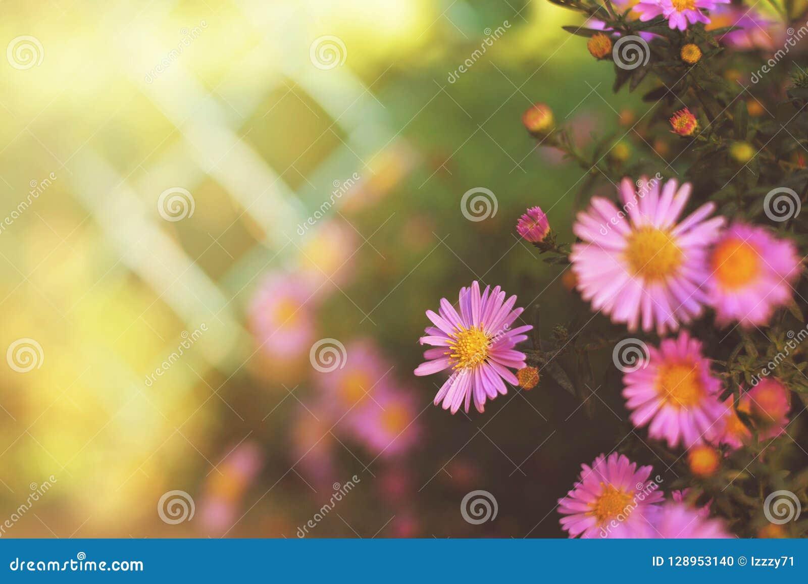 Herbstblumen Im Garten Stockfoto Bild Von Platz Outdoor