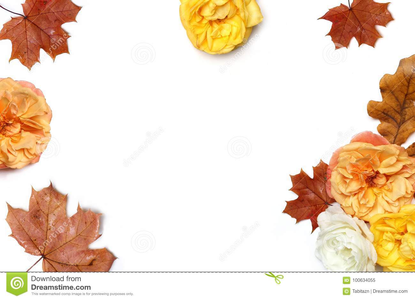 Herbstblumenrahmen gemacht von den bunten Ahorn- und Eichenblättern und verblassenden von den Aprikosen- und Gelbenrosen lokalisi