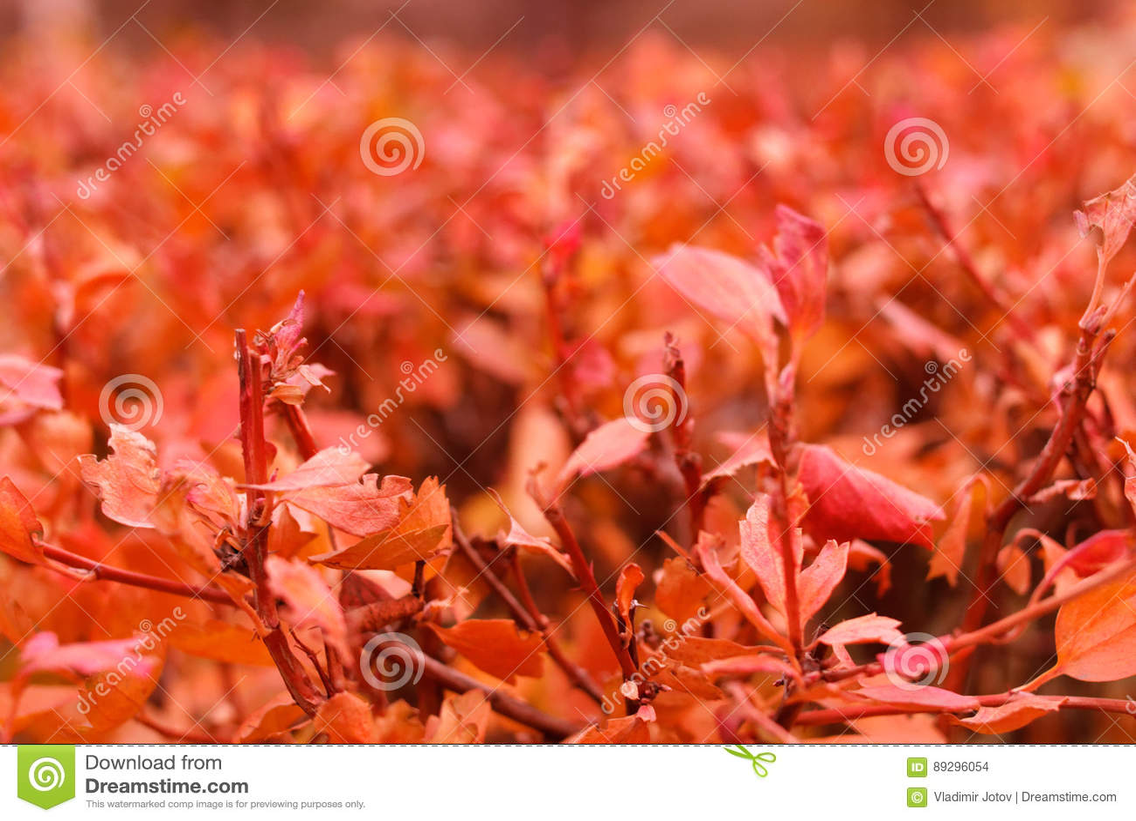 Herbstbuschlaub
