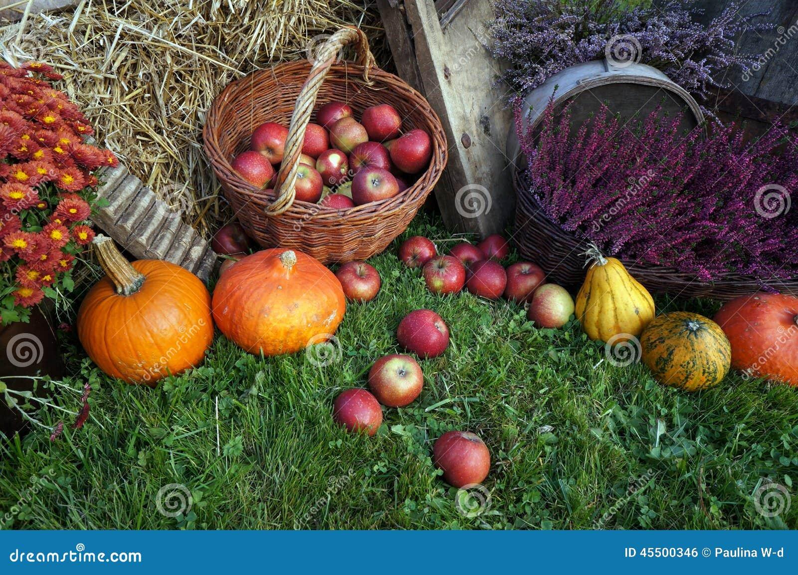 Herbstdekorations-, Rote und Grüneäpfel in einem Weidenkorb auf Stroh, Kürbisen, Kürbis, Heideblumen und Chrysanthemenblumen