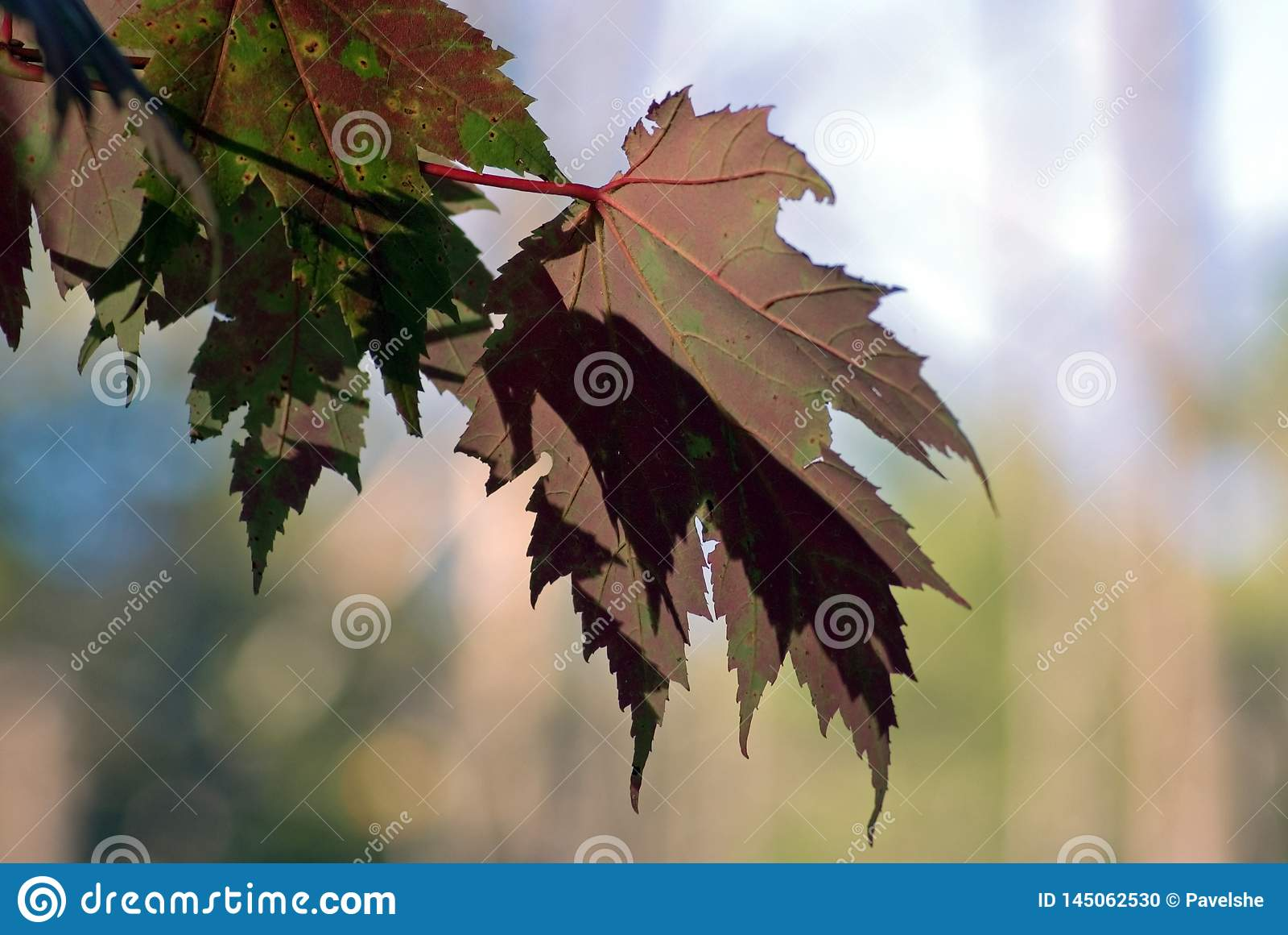 Herbstfarben 9