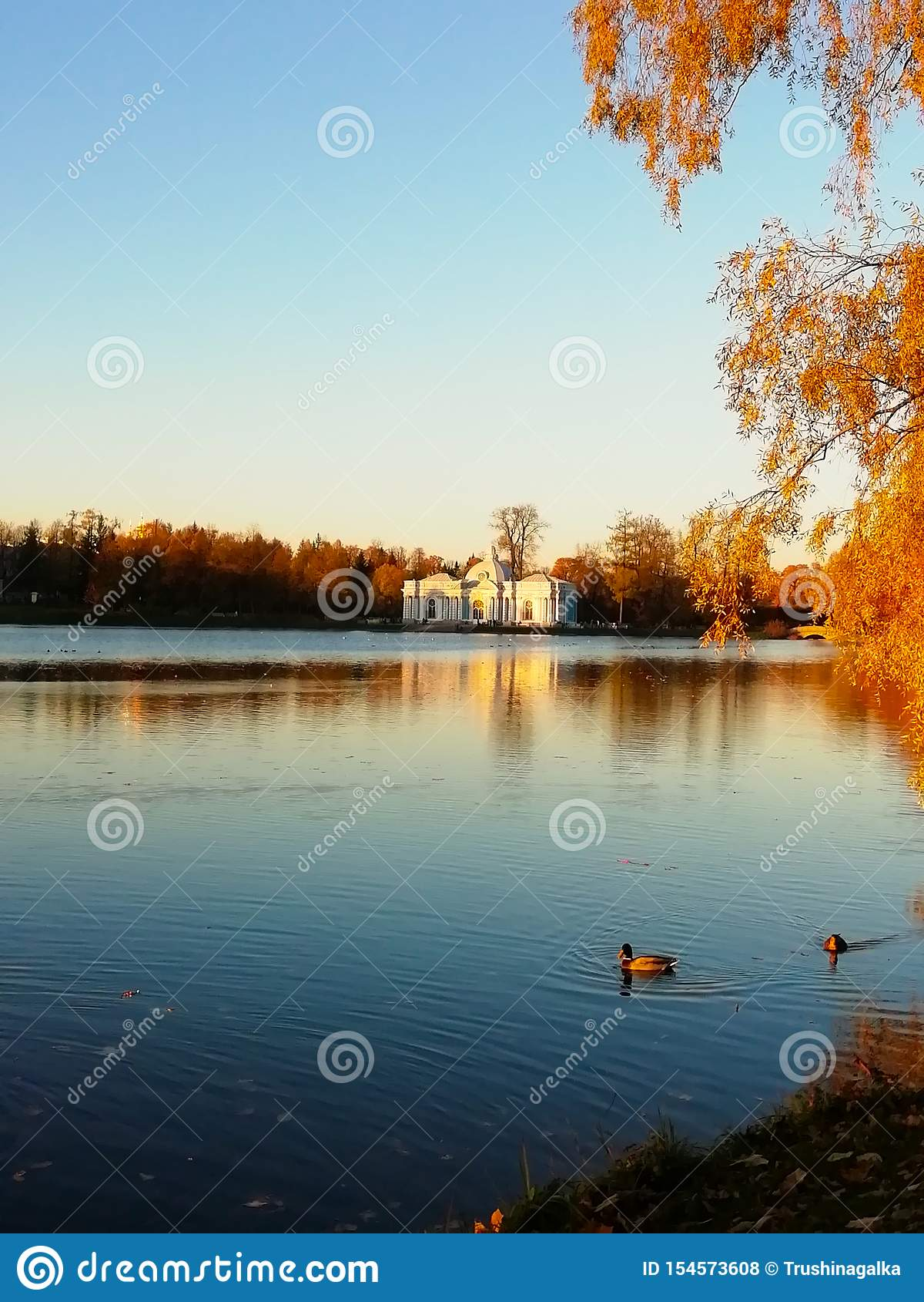 Herbstgelbbl?tter von B?umen Schwimmen mit zwei Enten im Teich Blauer Himmel und Wasser