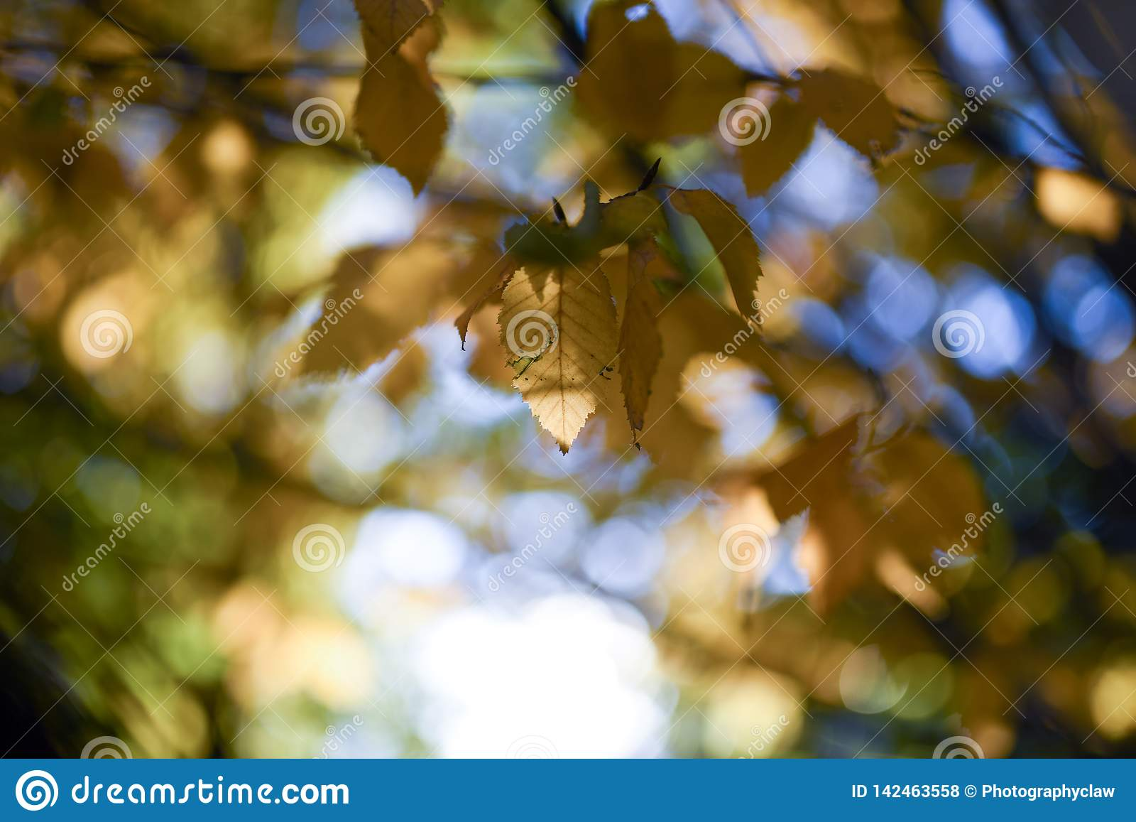 Herbstlaub-Blätter färben Bokeh gelb
