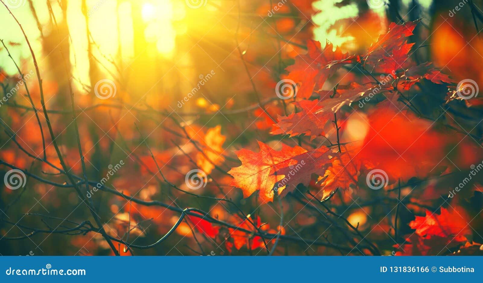 Herbstlaub Hintergrund, Hintergrund Landschaft, Blätter, die in einem Baum im herbstlichen Park schwingen Fall Getrocknete Kräute