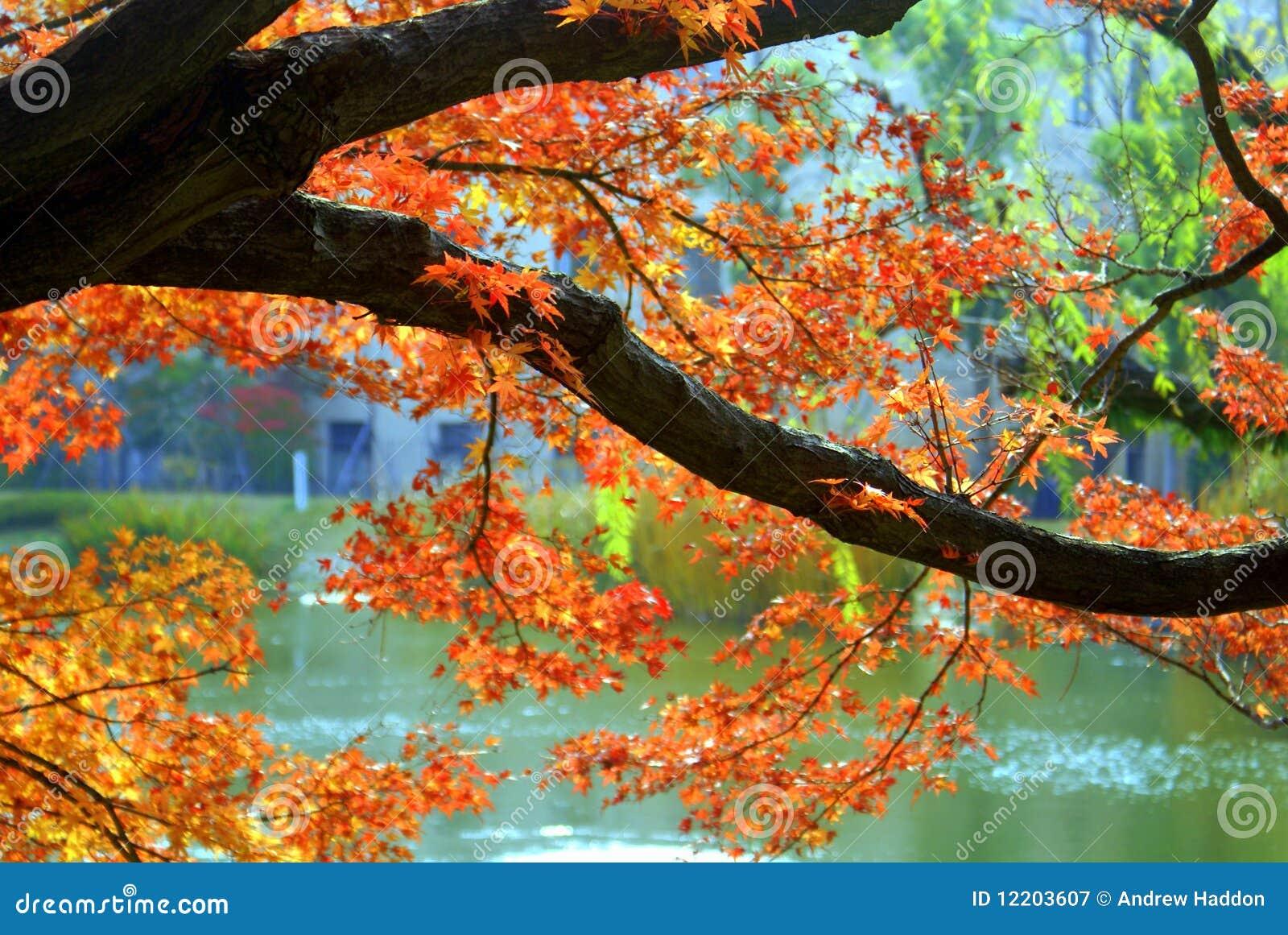 Herbstlaub in Nishinomiya