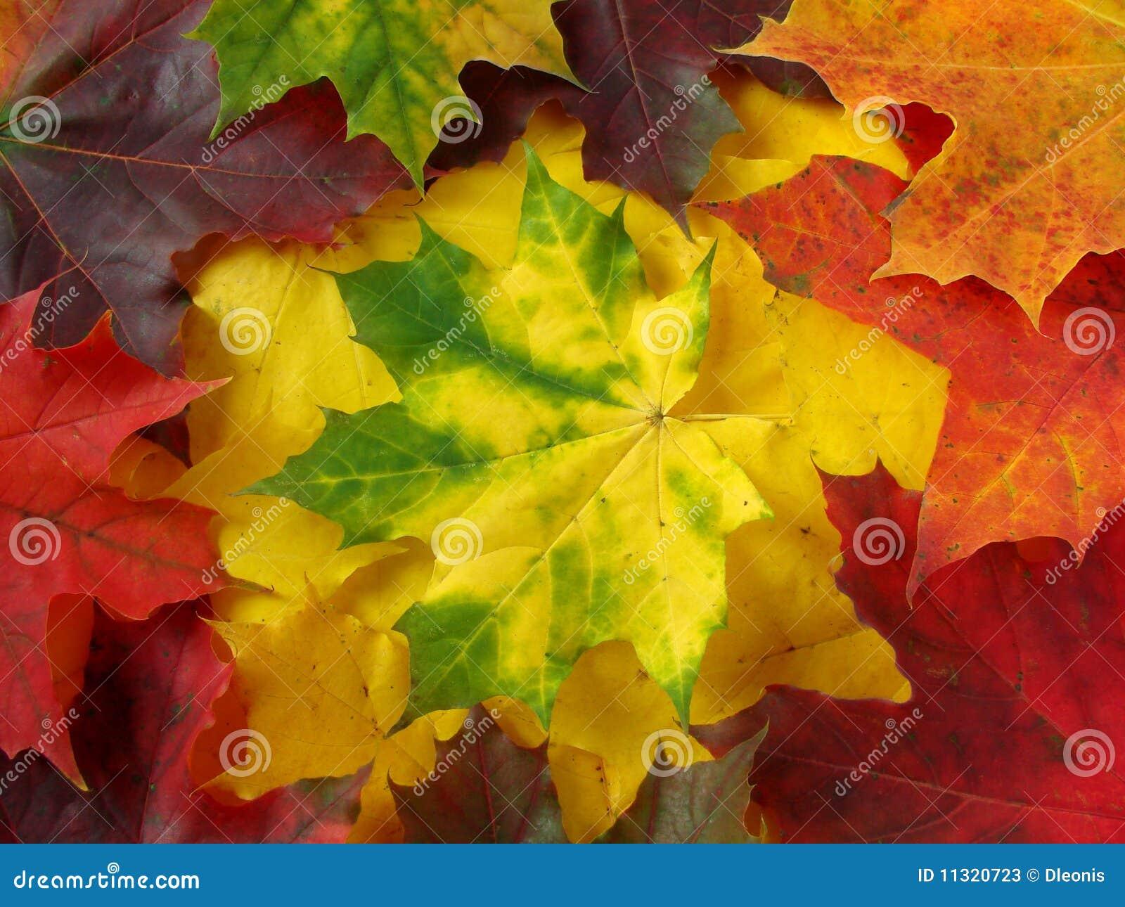 Herbstliche Ansammlung