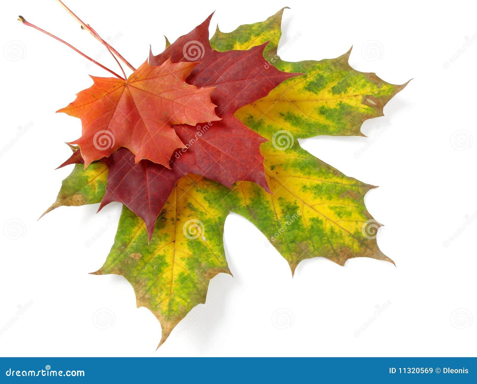 Herbstliche Blattpalette