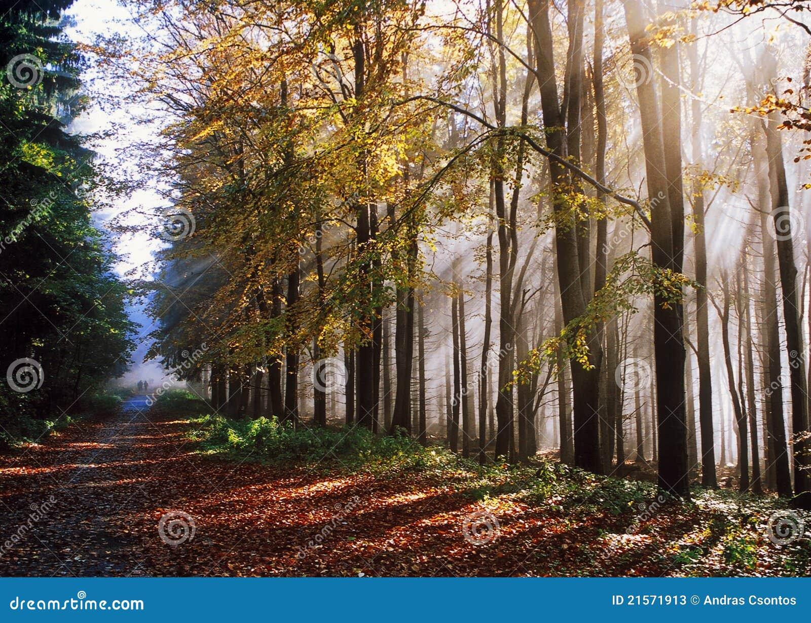 Herbstliche Reise