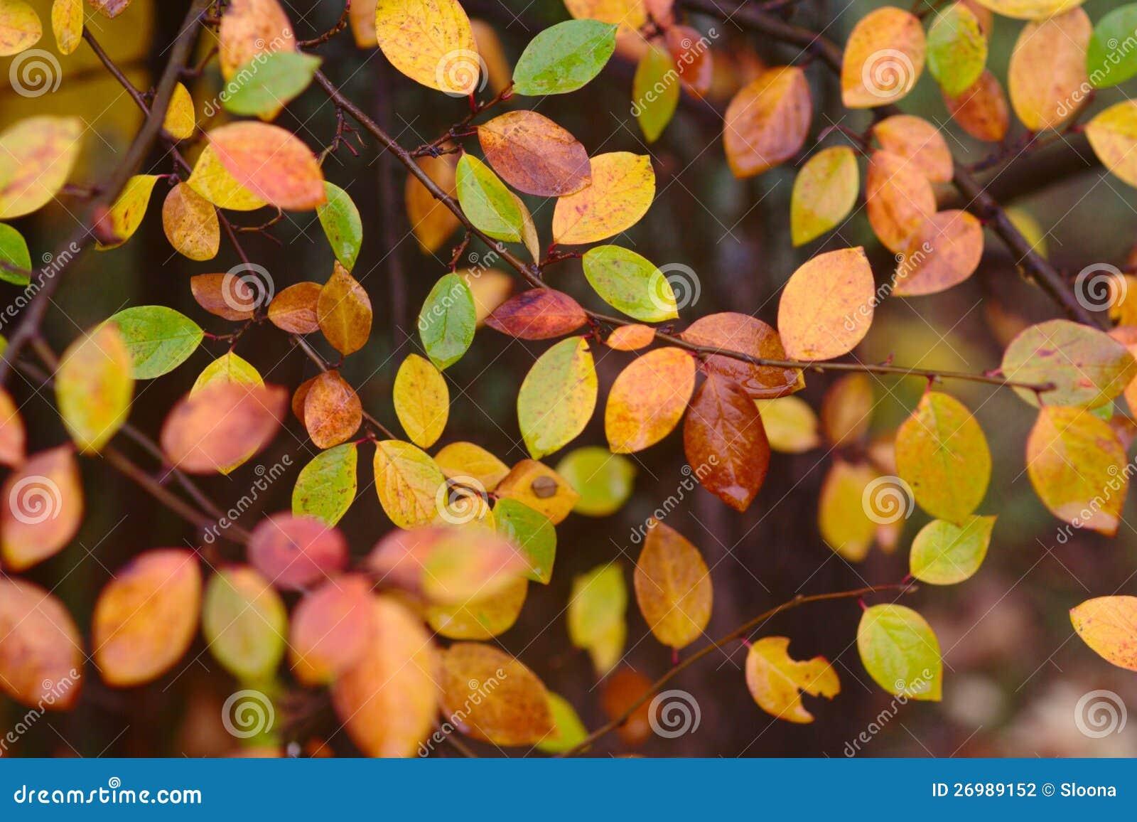 Herbstmuster mit den Roten, Grünen und Gelbblättern