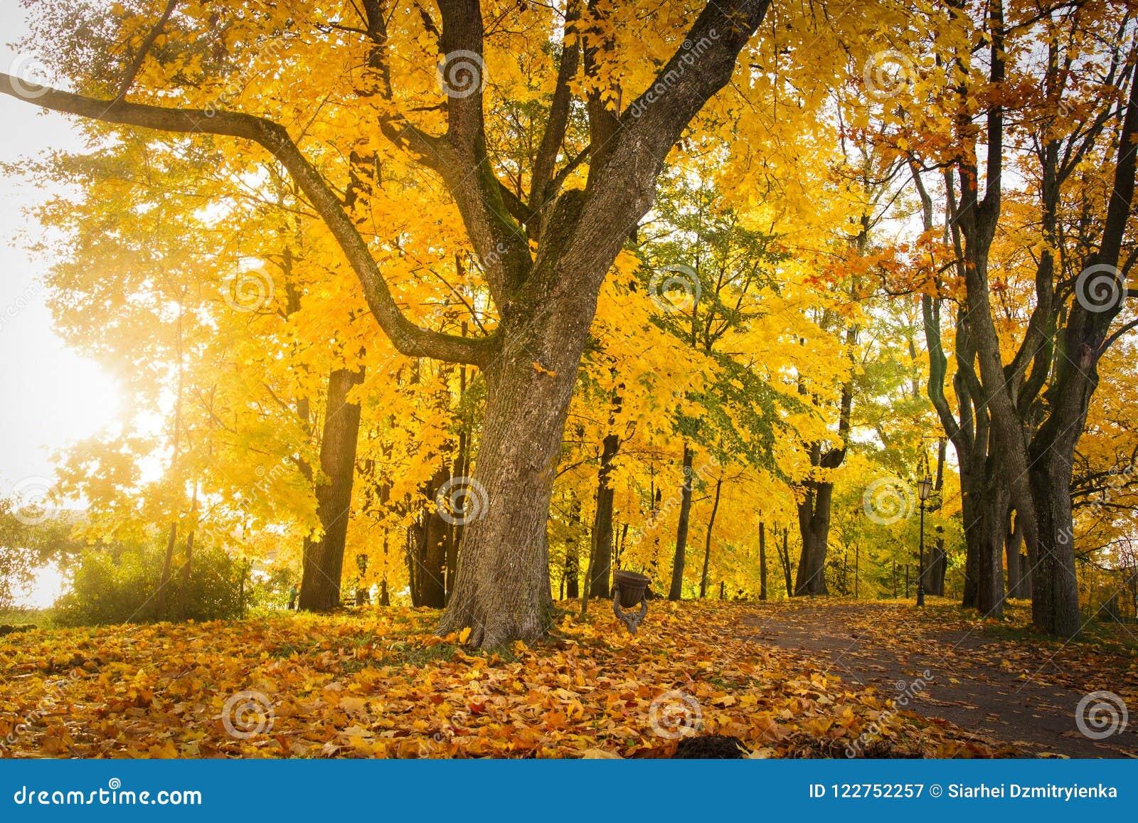 Herbstnaturlandschaft im bunten Park Gelbes Laub auf Bäumen in der Gasse Fall im Oktober