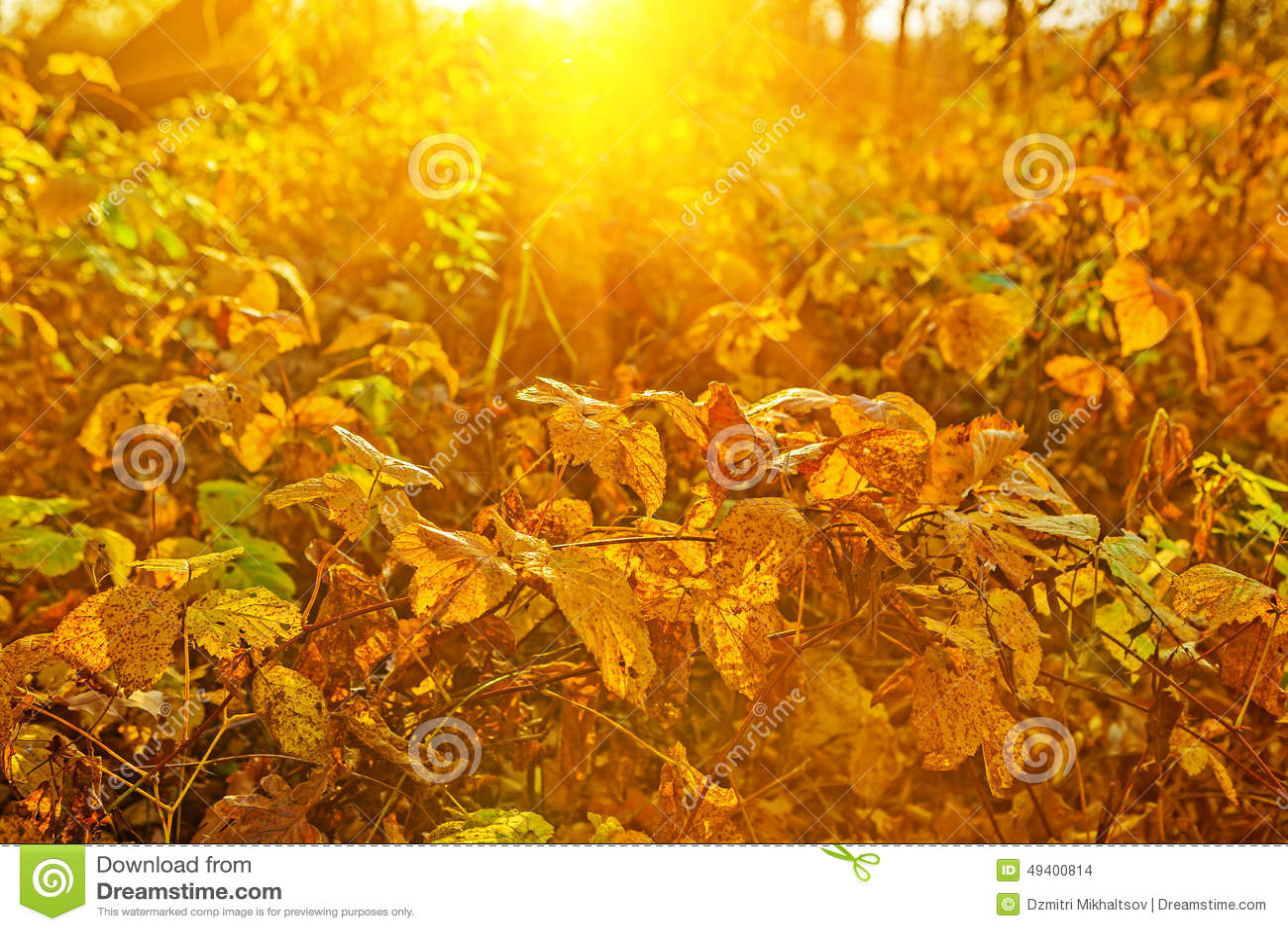 Download Herbstpflanzen Auf Sonnenaufgang Instagram Zauntritt Stockfoto - Bild von farbton, dämmerung: 49400814