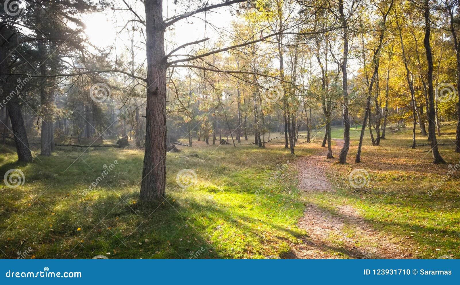 Herbstsonnenuntergang in Misty Forest