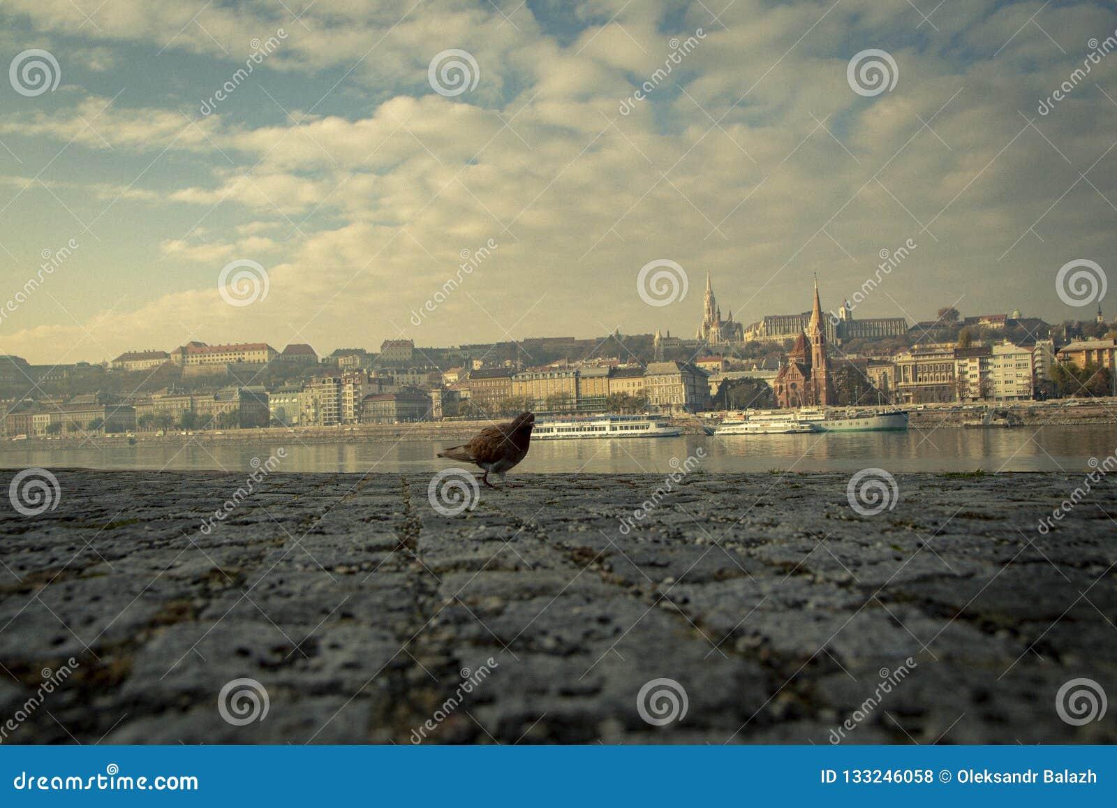 Herbststadt Budapest