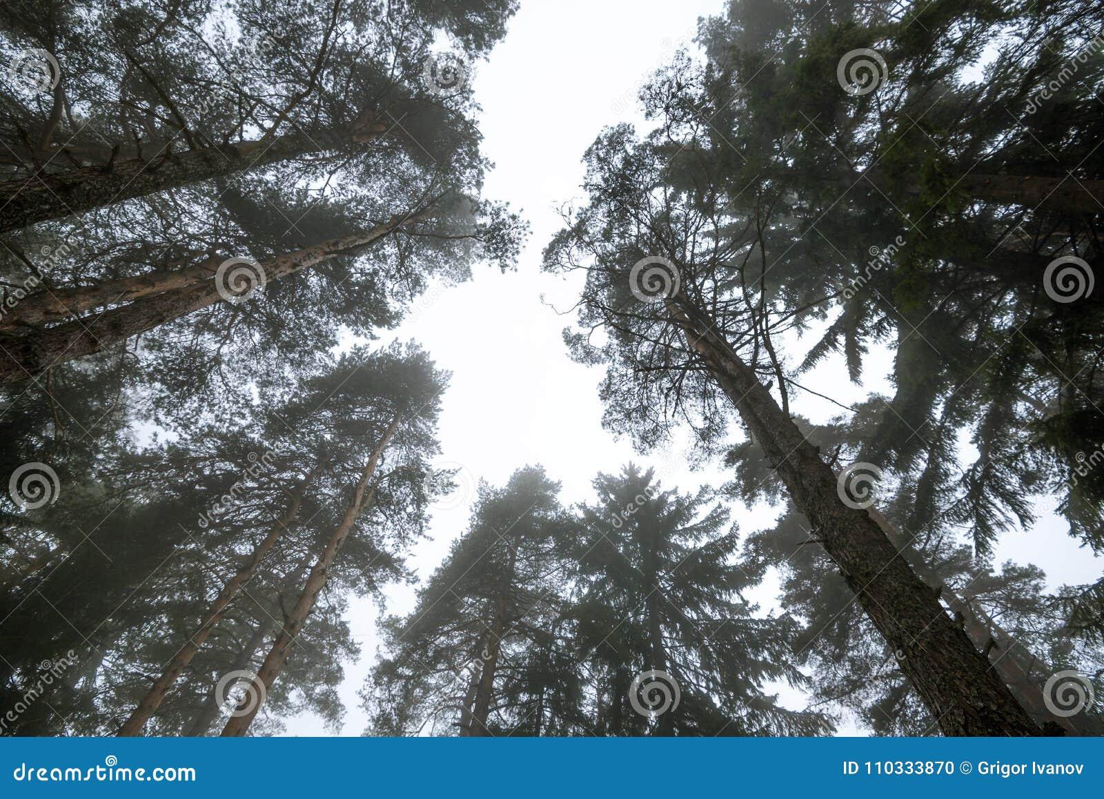 Herbstwald auf nebelhaftem Morgen