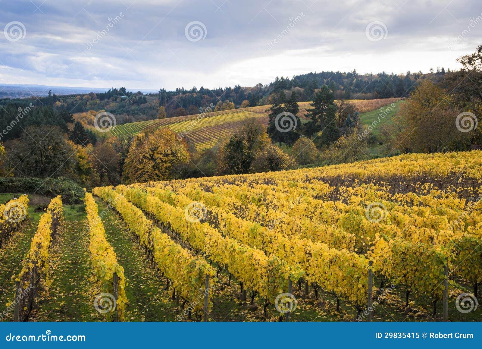 Herbstweinberge, Willamette-Tal, Oregon