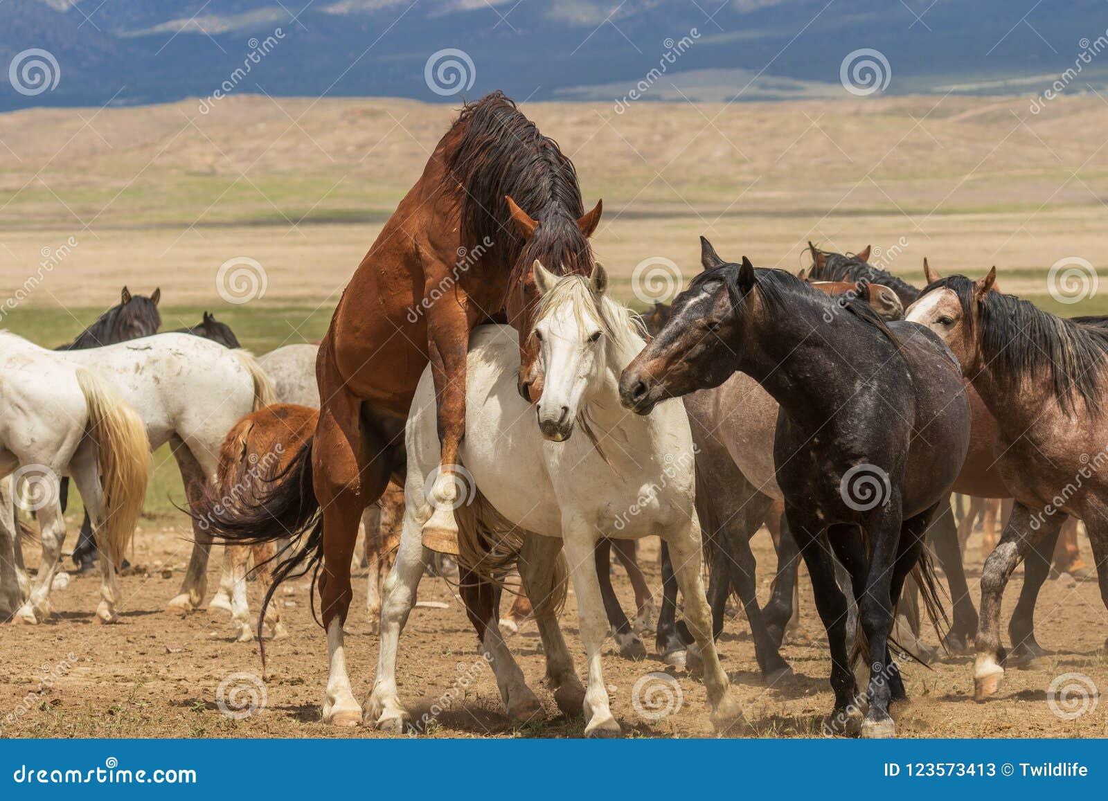 Herd Of Beautiful Wild Horses In Summer Stock Image Image Of Wildlife Summer 123573413