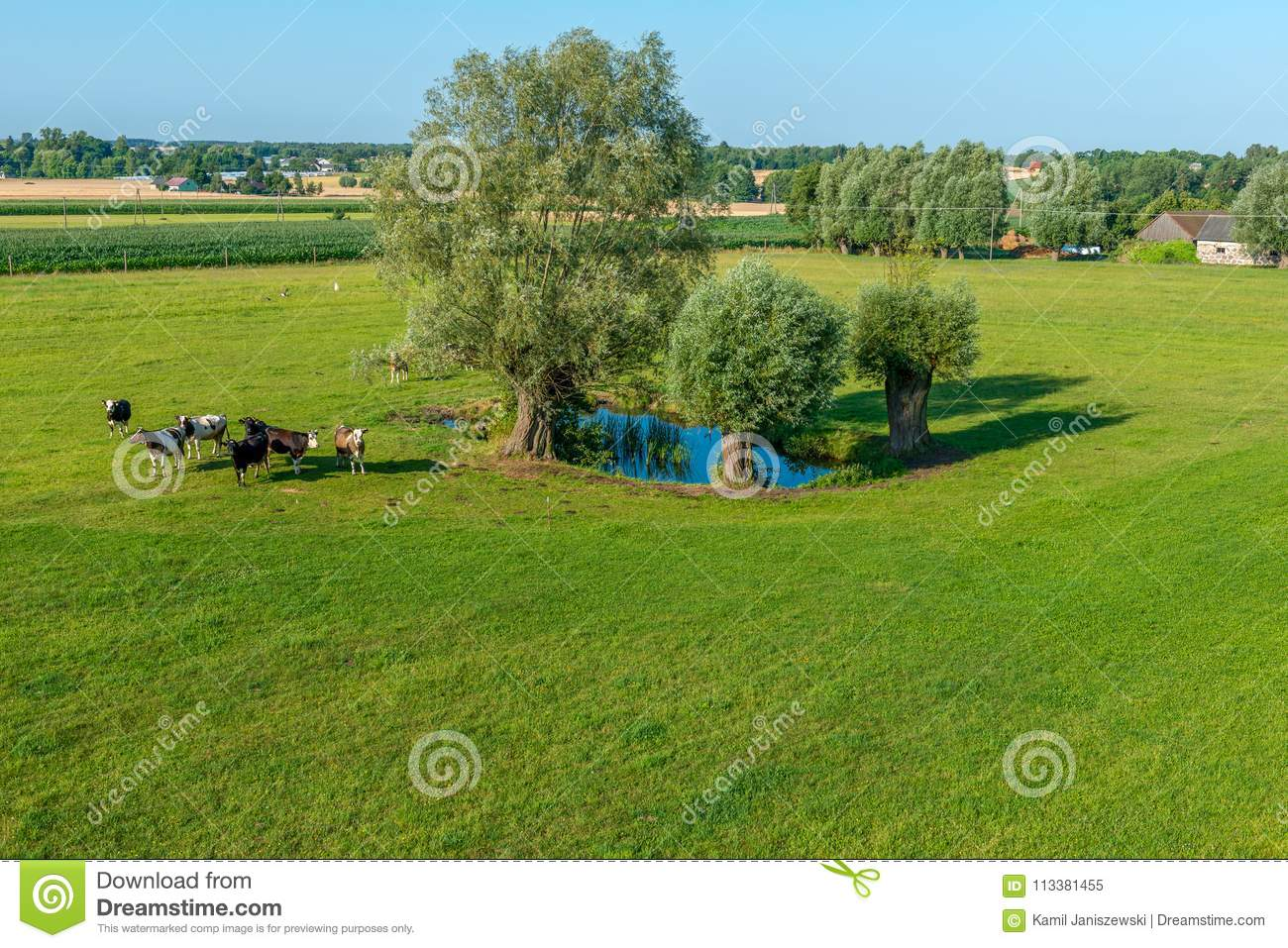A herd of cows is grazing at a pond on a sunny day