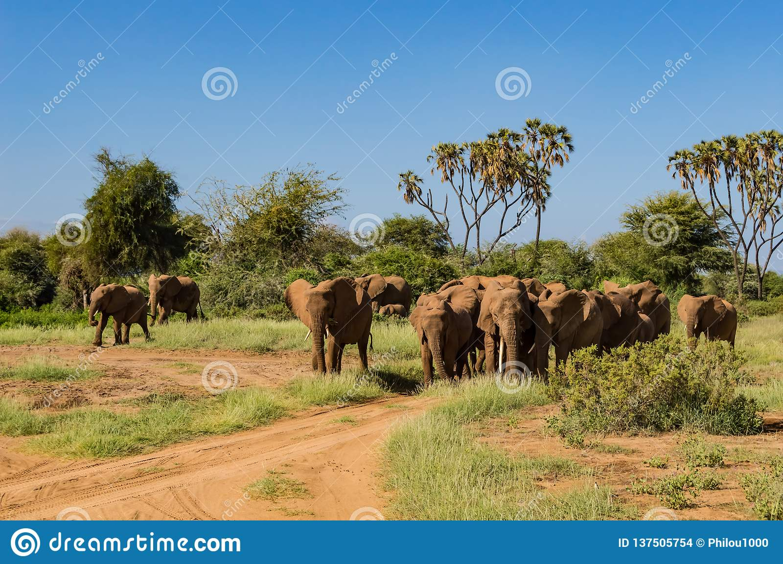 Herd elephants in the savannah
