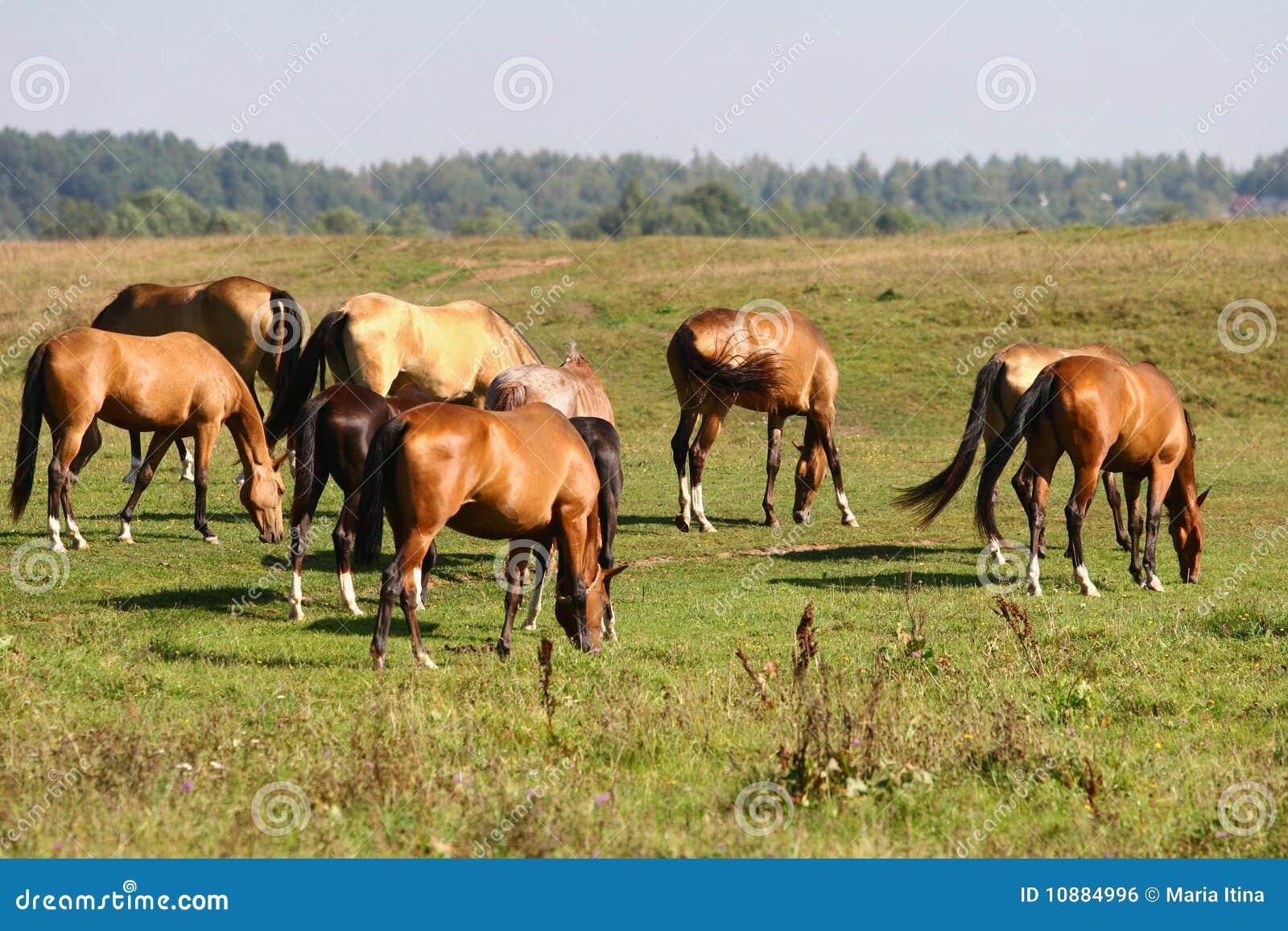 Herd grazing