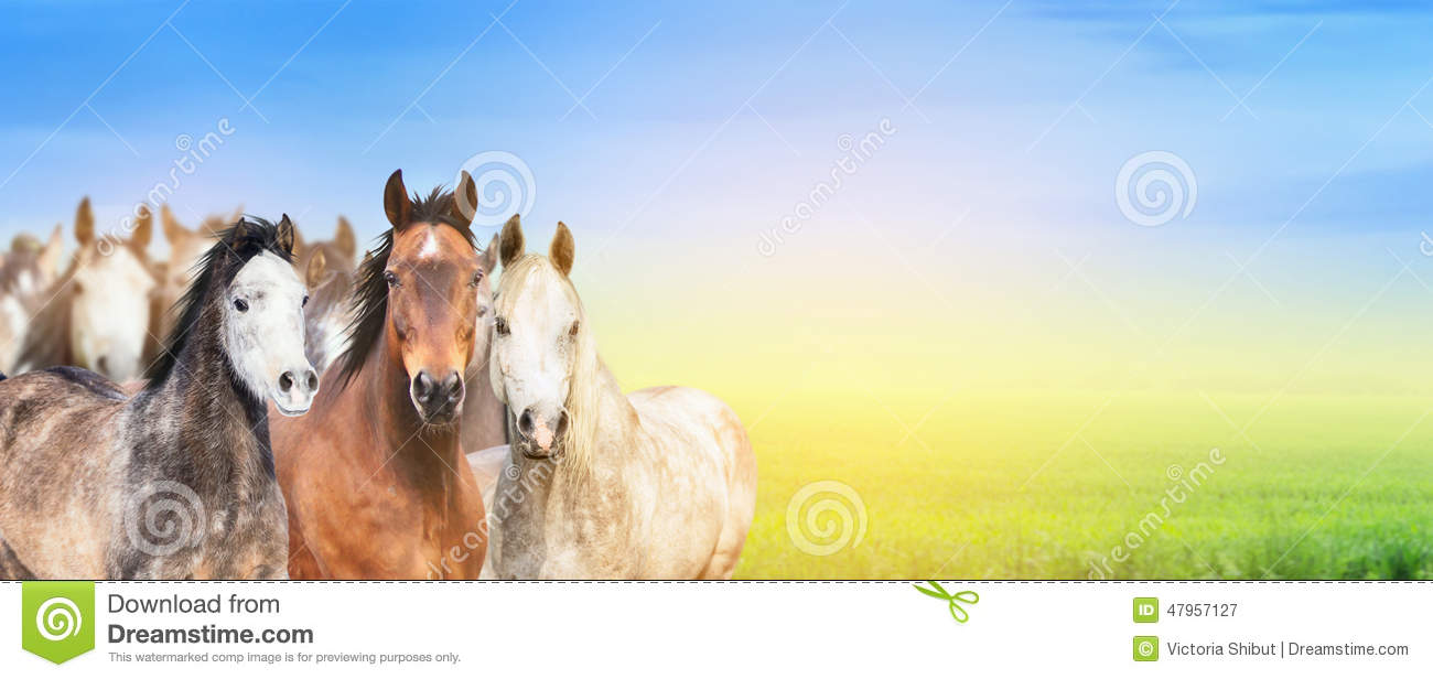 Stock Illustration Cow Calf Line Art Illustration Image56490316 together with Royalty Free Stock Photos Cartoon Animal Frame Cute Chicken Background Image40625368 furthermore Interesting likewise Beautiful Farm Background With Hen And Rooster 1127801 together with Stock Image Eating Horse Meat Concept European Scandal Horse Meat Beef Meat Horse Toy White Plate Fork Knife Image30199131. on animal farm landscape