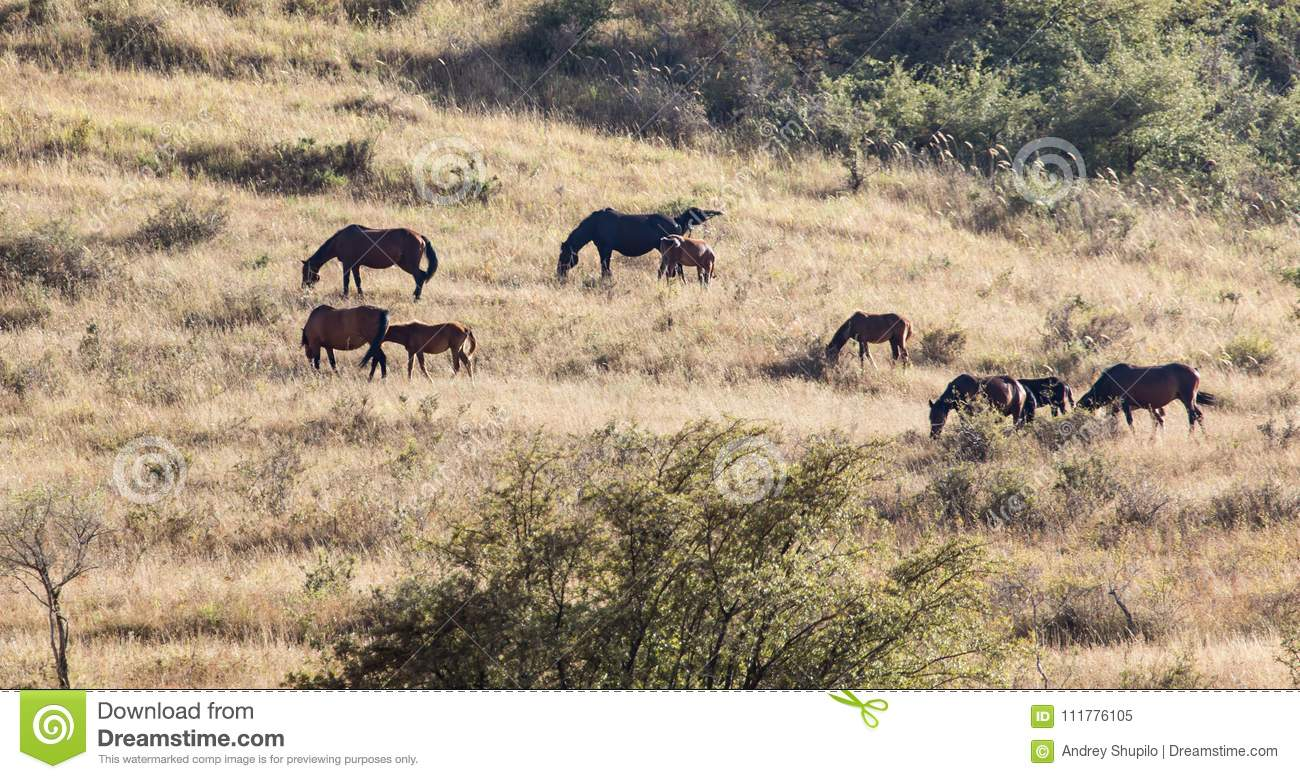 Herd of horses in the pasture in the fall
