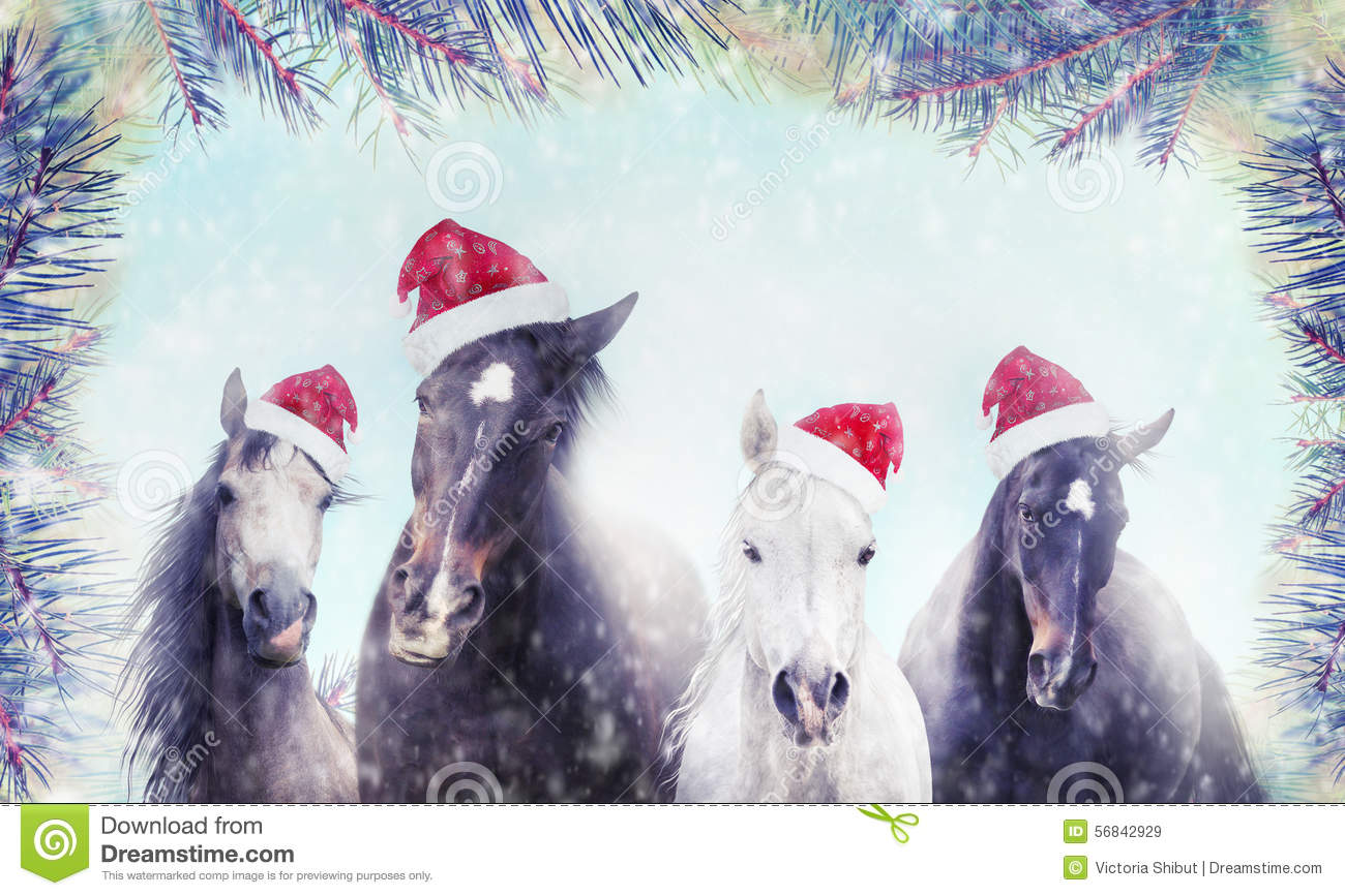 Herd of horses with Santa hat on winter snow and Christmas tree background. Banner