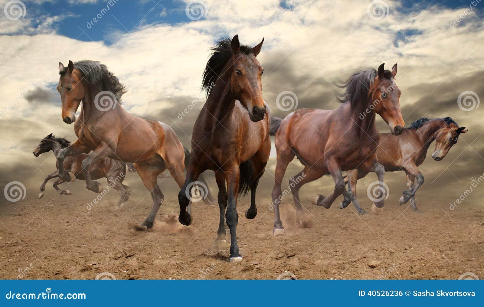 Herd Of Horses Stock Photo Image Impetuous Wild