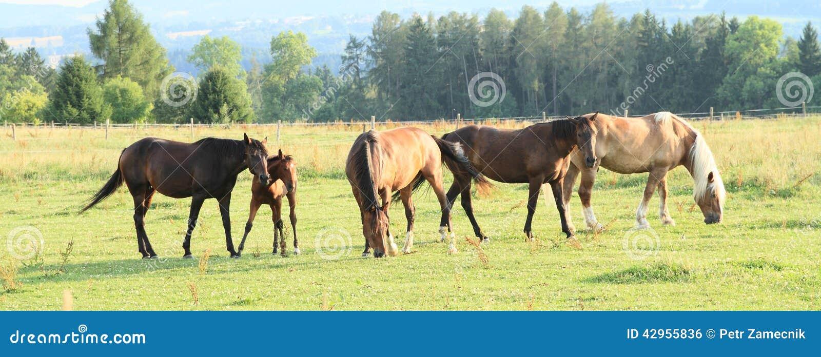 Herd od horses