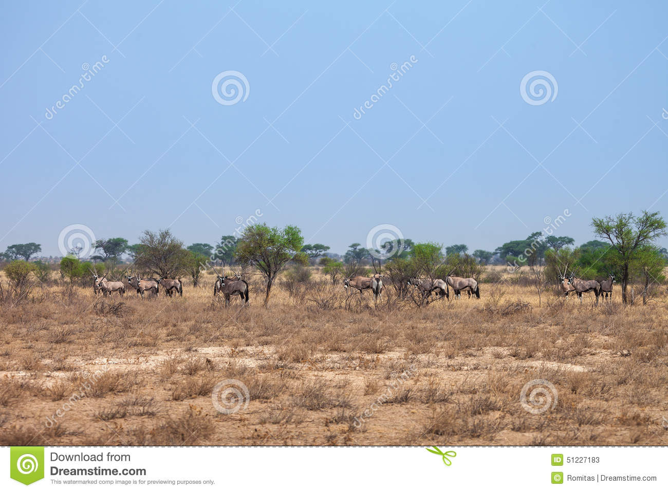 Natural Resources In The Kalahari Desert