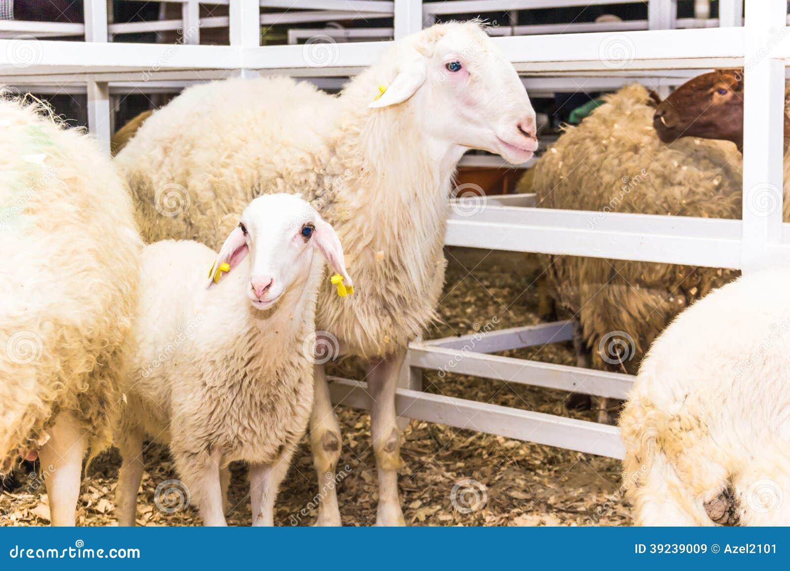 Herd Of Sheep Stock Photo - Image: 39239009