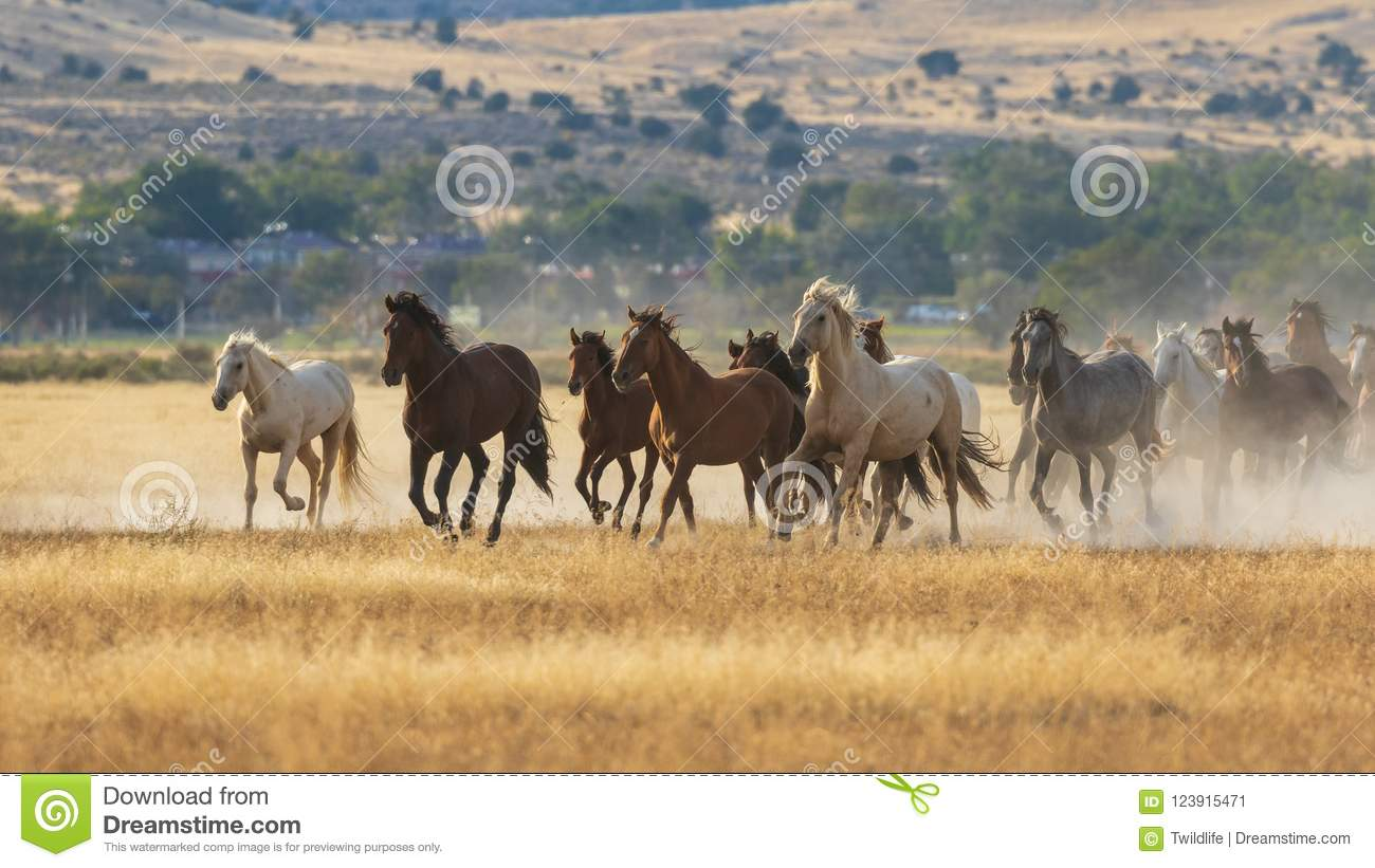 48 951 Wild Horses Photos Free Royalty Free Stock Photos From Dreamstime