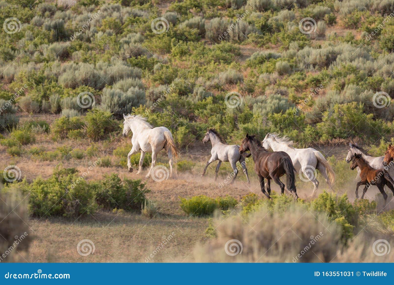 Wild Horses Running Stock Image Image Of Summer Mammal 163551031