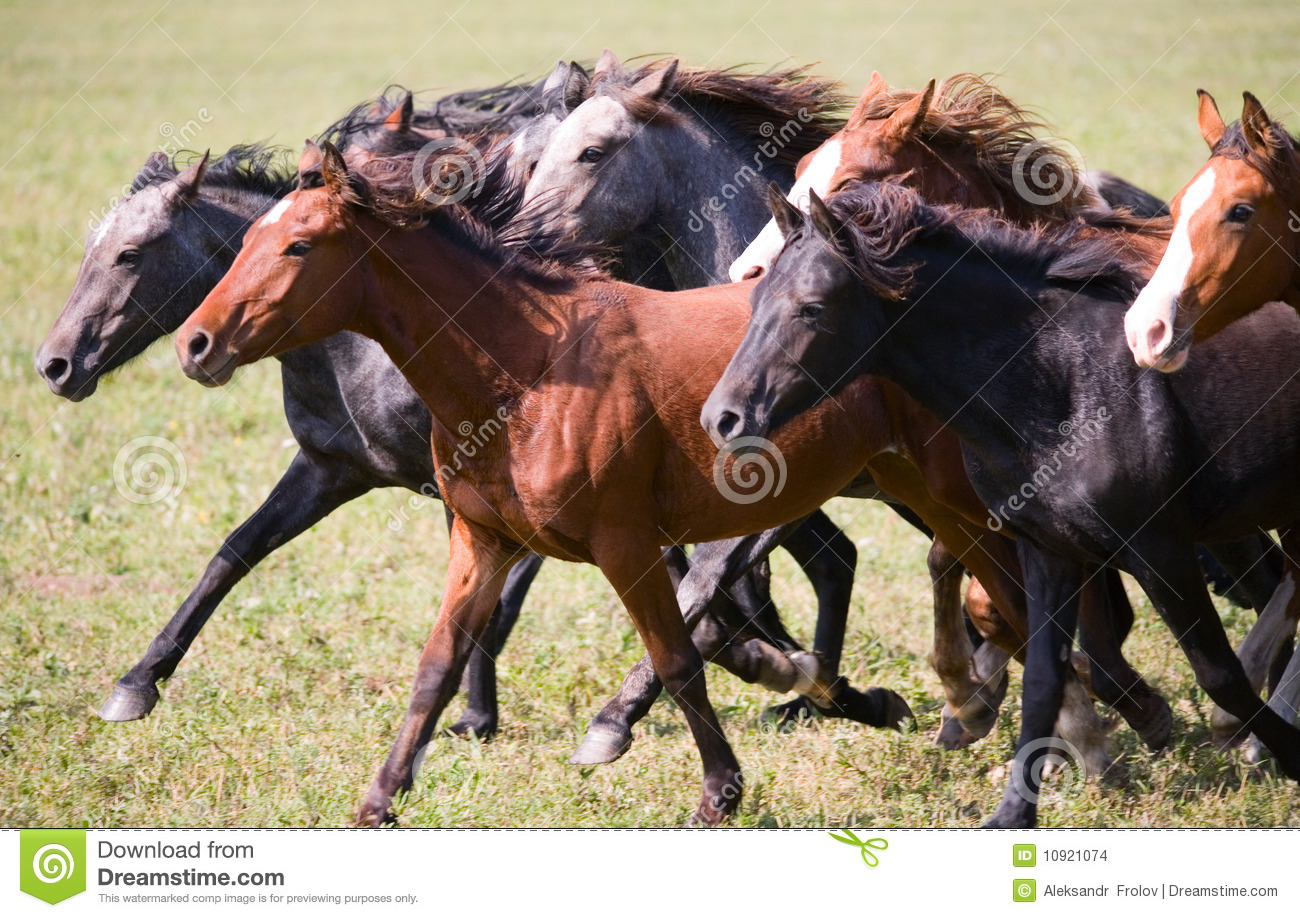 Download A herd of young horses stock photo. Image of pinto, farm - 10921074