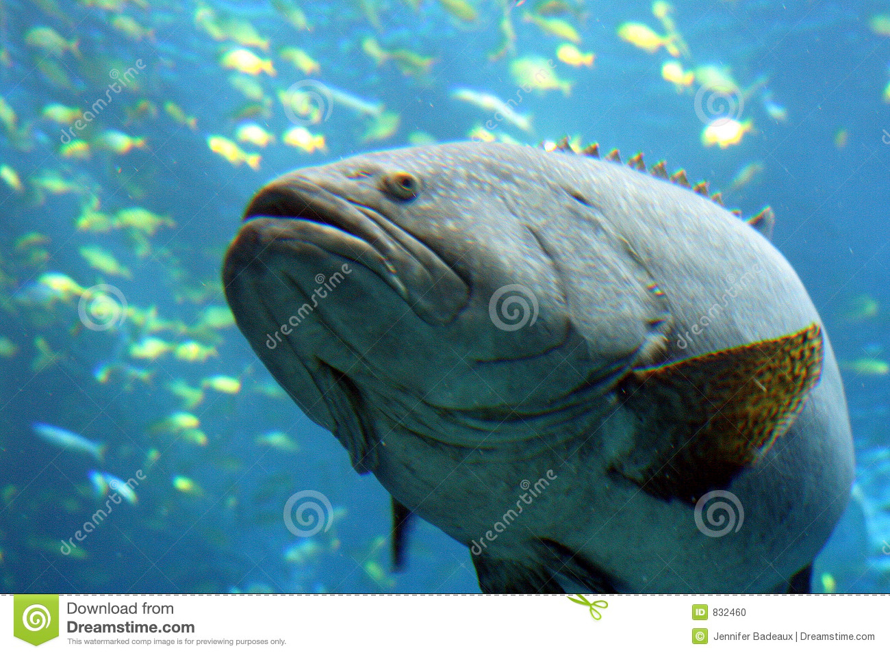 Here fish fishy stock photo image 832460 for Dream about fish out of water