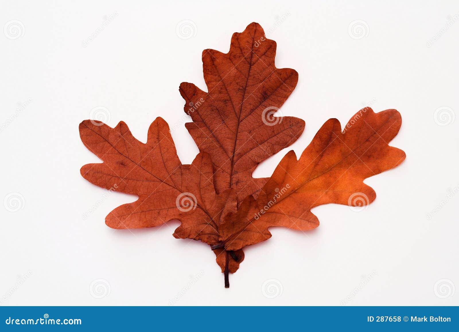 Herfst bladeren.