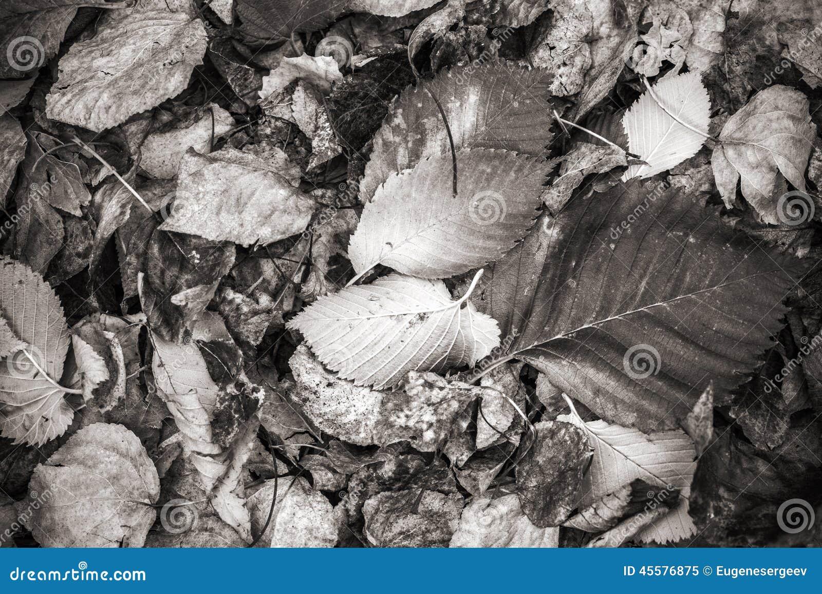 Herfst Gevallen Bladeren, Zwart-wit Foto Stock Foto - Afbeelding ...