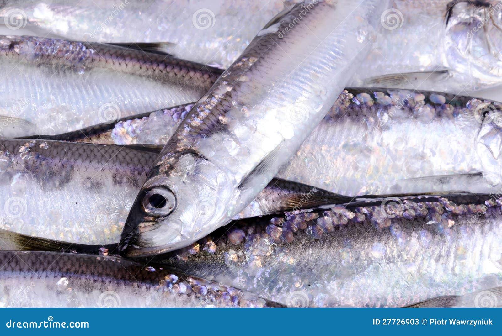 Heringfischhintergrund