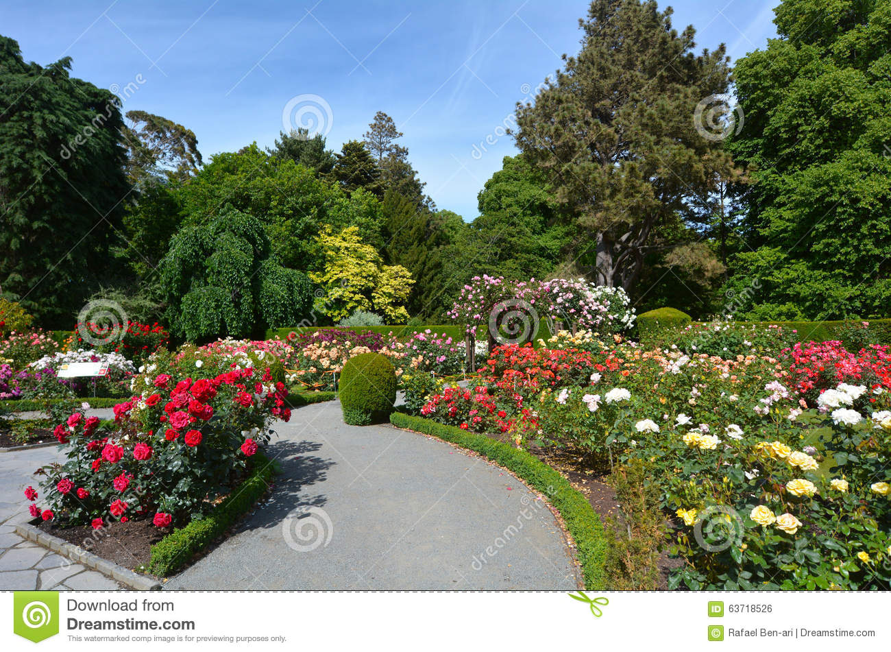 the heritage rose garden in christchurch botanic gardens new ze stock photo image 63718526. Black Bedroom Furniture Sets. Home Design Ideas