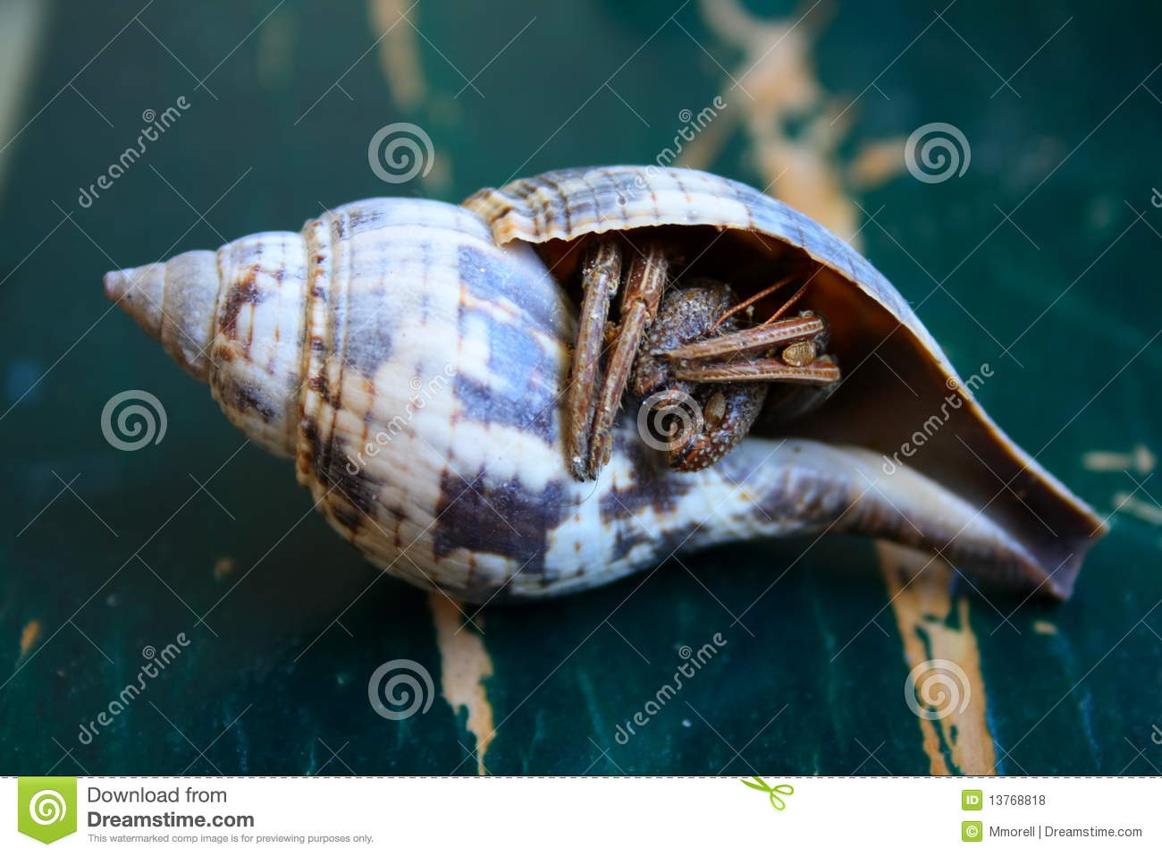 Hermit Crab Out of Shell Clipart Hermit Crab Out of Shell