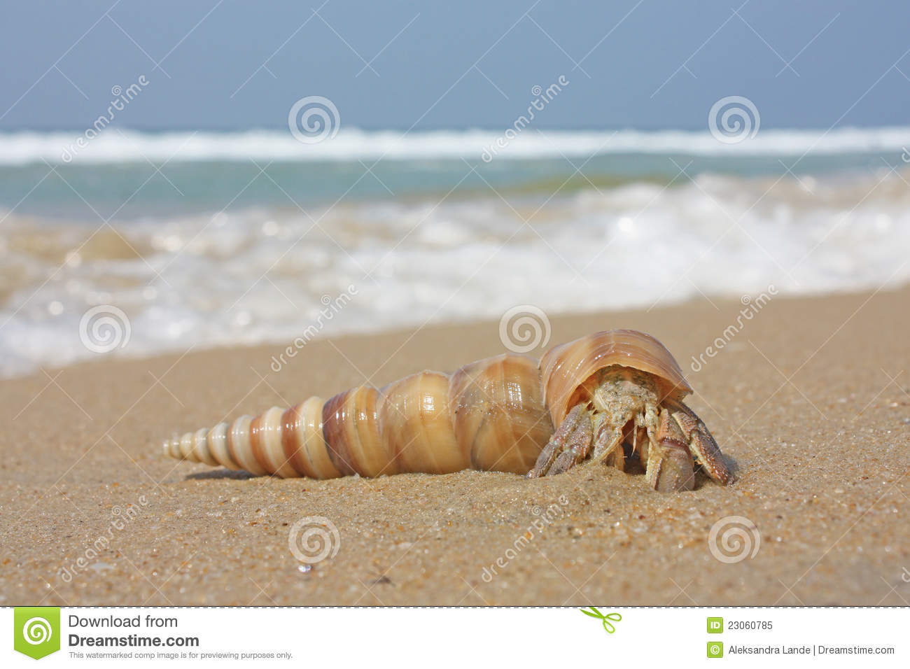 Hermit Crab On The Beach Royalty Free Stock Photo - Image ...