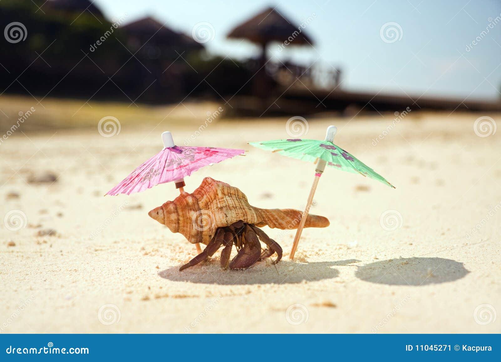 Hermit Crab Beach Stock Image Image