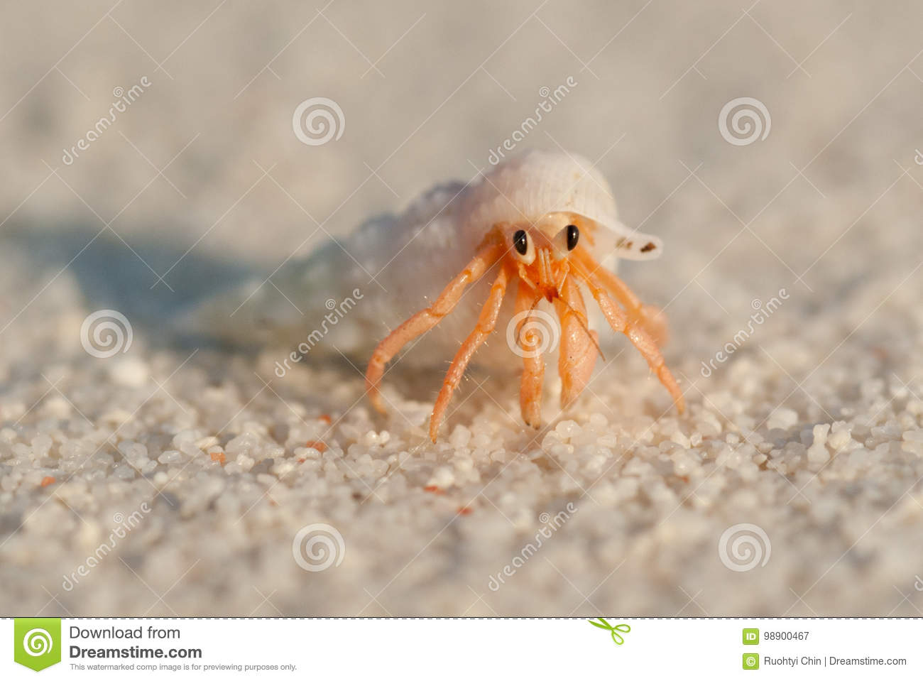 Download Hermit Crab stock image. Image of tiny, shell, sunset - 98900467