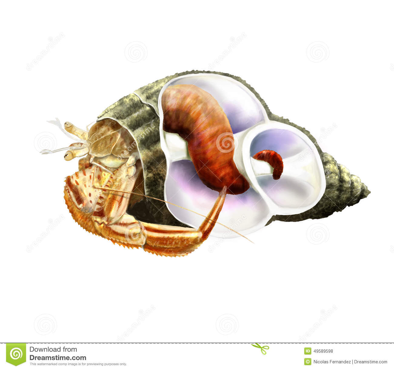 Crab anatomy stock illustration. Illustration of illustration - 19282226