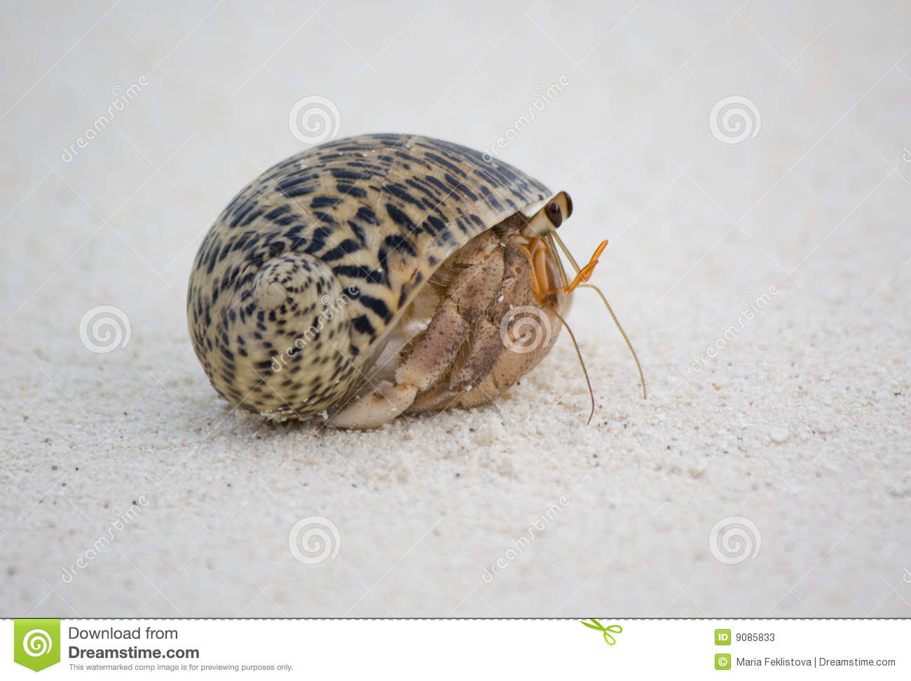 how to clean hermit crab sand