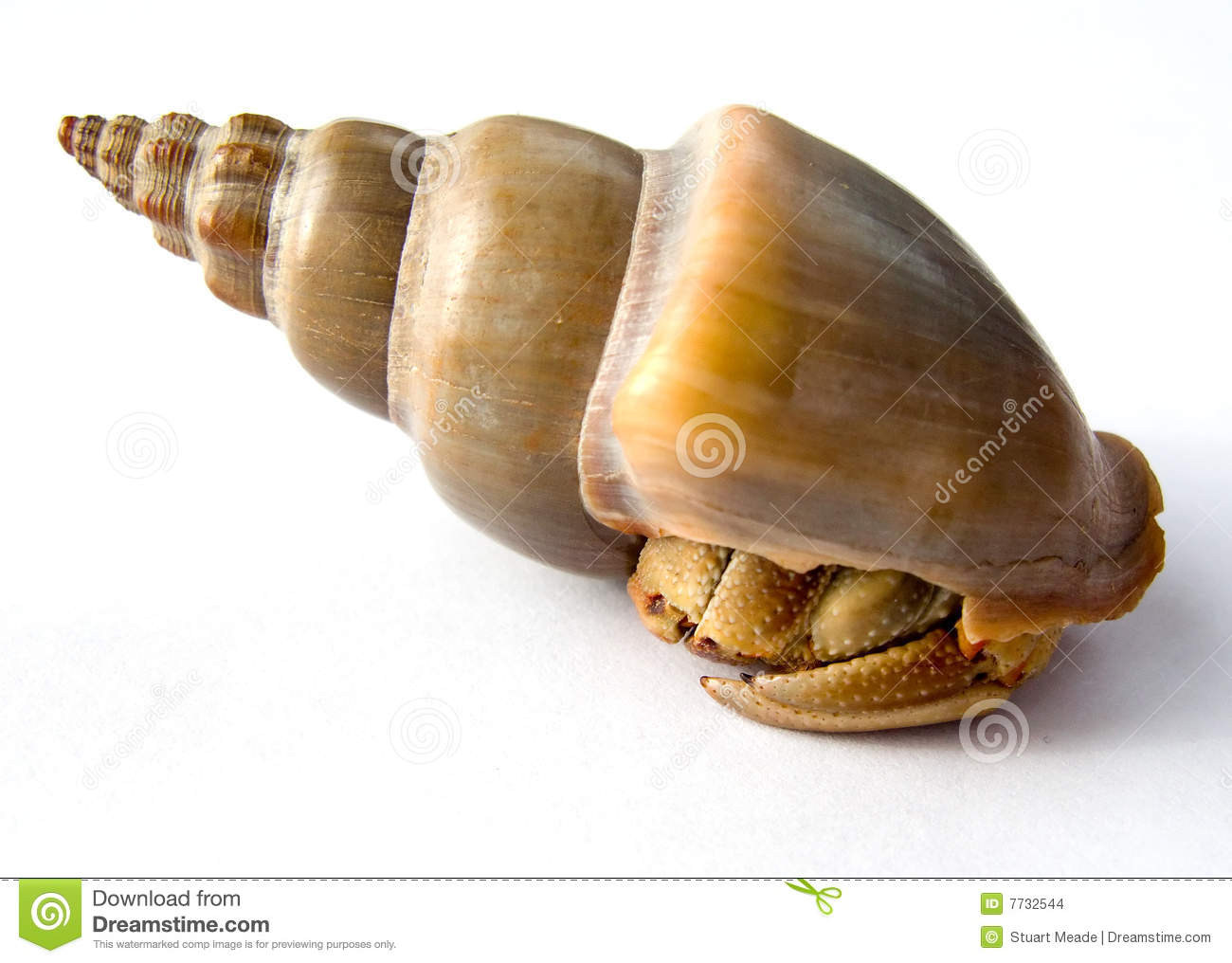 hermit-crab-shell-isolated-7732544.jpg
